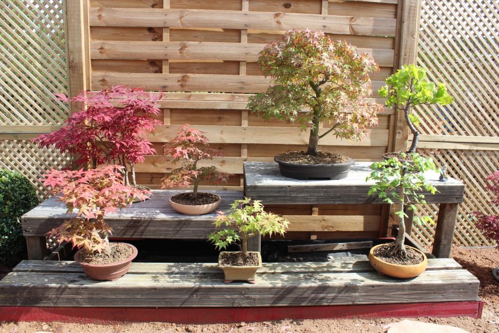Jardin japonais bonsai accueil design et mobilier Jardin japonais bonsai